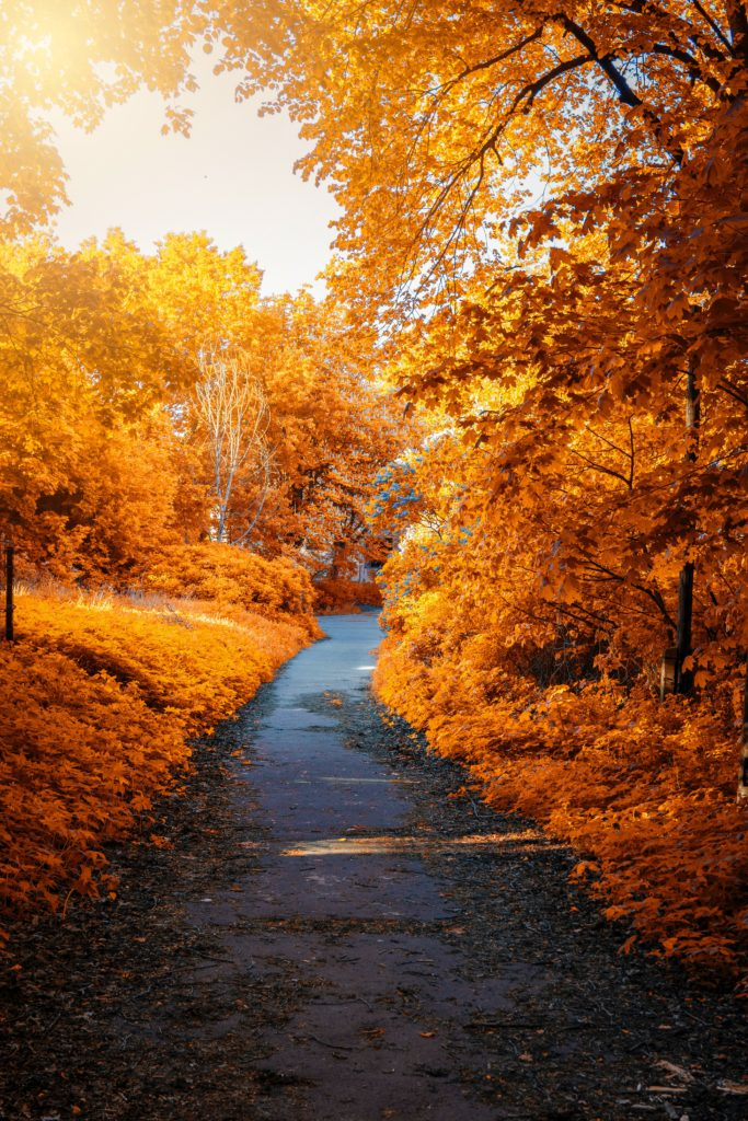 Photo Showing colorful autumn trees
