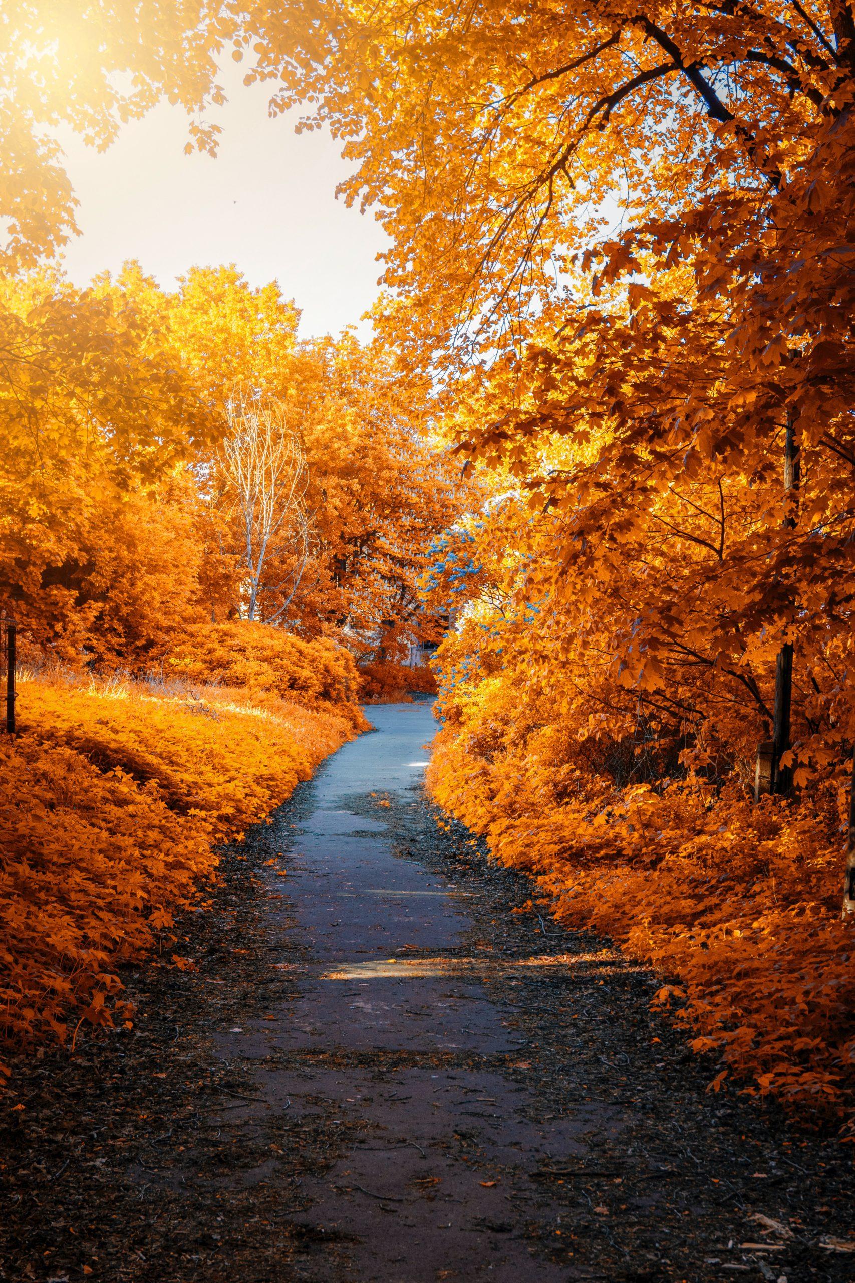 Zdjęci eprzedstawiające kolorowe jesienne drzewa